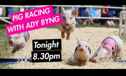Review – Pig Racing at the Haywain